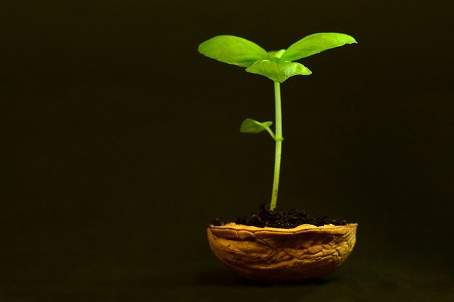 benefits of health insurance, green plant growing in nutshell